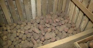 хранение картофеля в хоз блоке