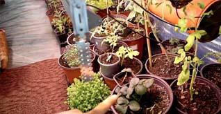 растения зимой в бытовке